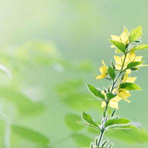 flower-background-op